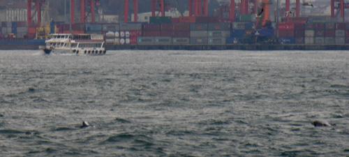 Delfinek a Boszporuszban