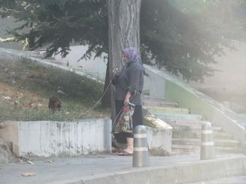 Öreg néne tyúkocskája