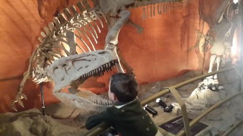 Yangchuanosaurus csontváz