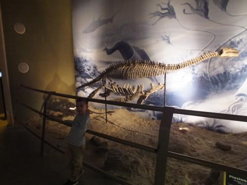 Plesiosaurus csontváz